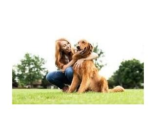 Hobart Canine Obedience Club