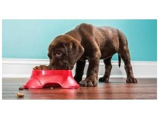 Big Dog Pet Foods