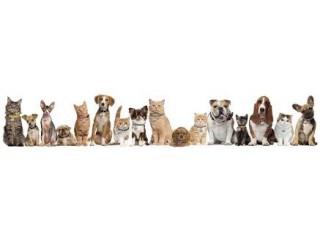 Pets Corner Store