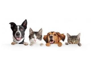 World 4 Pets